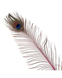 Peacock Feather Eyes Stem Dyed - 25-40 Inch - 10 PCS - Shocking Pink