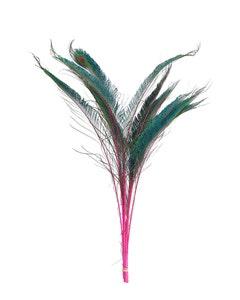Peacock Swords Stem Dyed - Shocking Pink