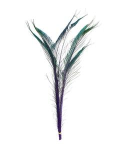 Peacock Swords Stem Dyed - Regal