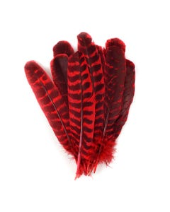 Barred Turkey Quills - Left Wing - 8-12 Inches - 12 pc - Hot Red