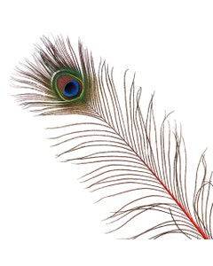 Peacock Feather Eyes Stem Dyed - 25-40 Inch - 10 PCS - Red Feathers