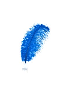 """1 PC PKG Ostrich Feathers Drabs Dyed 17"""" - Royal Blue"""