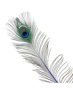 Peacock Feather Eyes Stem Dyed - 25-40 Inch - 10 PCS - Royal
