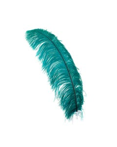 Ostrich Prime Femina Feathers - 6pc - 17 - 25 Inches -  Teal