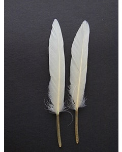 """Loose Duck Cosse Dyed Feathers 3-4""""  - White"""