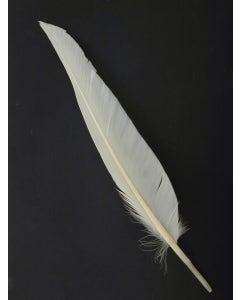 Duck Pointer Feathers - White