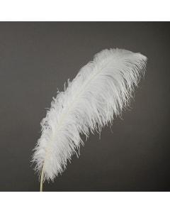 Ostrich Prime Femina Plumes - White