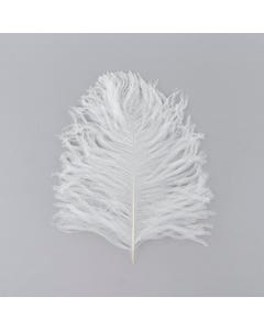 Ostrich Tail Feathers - Cut Tops  5-11 inch - 12 pcs  - White