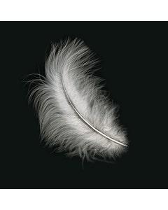Loose Turkey Marabou Dyed - White