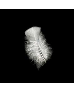 Loose Turkey Plumage Feathers - 0.5 oz - White
