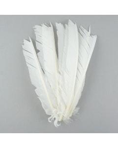 Turkey Pointers Left Wing - White