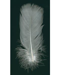 White Parried Turkey Tails - White