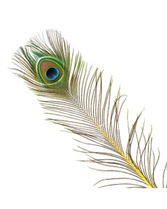Peacock Feather Eyes Stem Dyed - Yellow